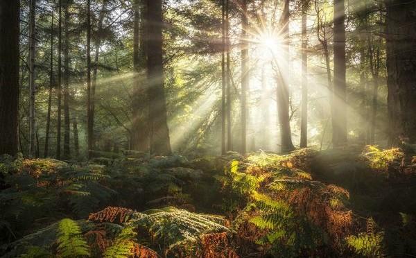 The Sun: Our Energy Source